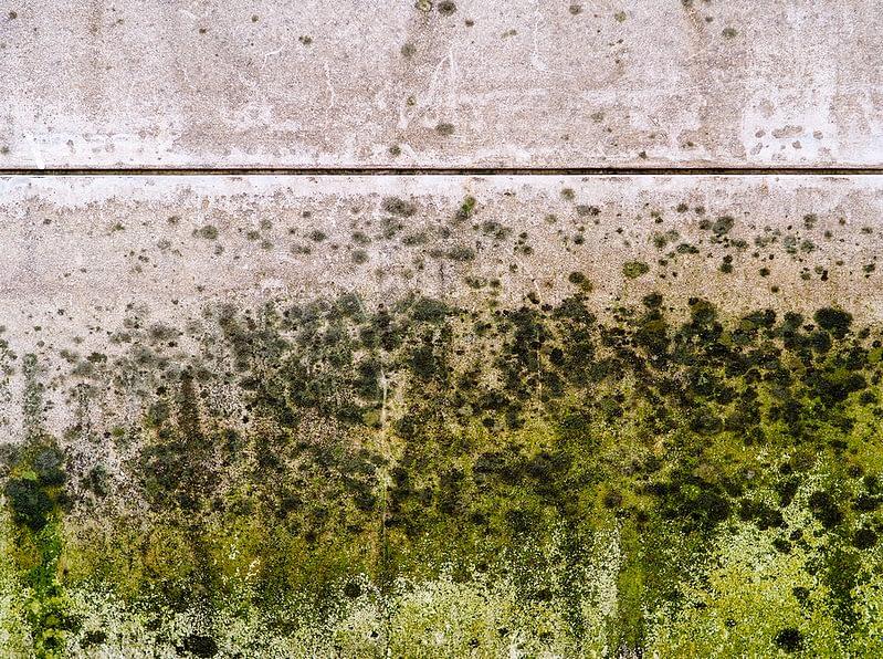 mold developing inside a basement